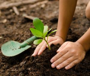 kids planting vegetable garden