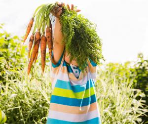 kid holding carrots in vegetable garden